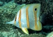 www.fishbase.se