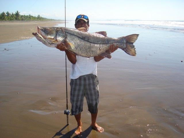 La Pesca del Róbalo (Centropomus sp.) por José Manuel López Pinto / Actualizado a 03 de Noviembre del 2013 DSC03675